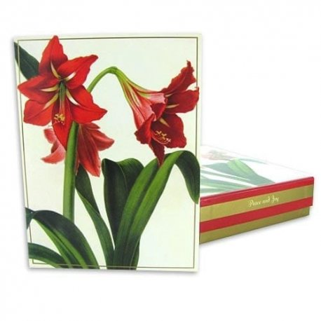 Red Flower Holiday Card Set of 20-inside Christmas card reads: Peace and Joy